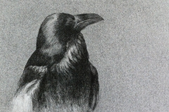 Raven, 2017. Art by Cecilie Nyman